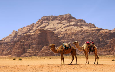 פרשת מטות, ספר במדבר